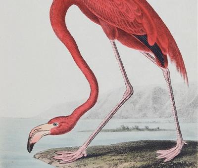 Fine Works of Ornithology