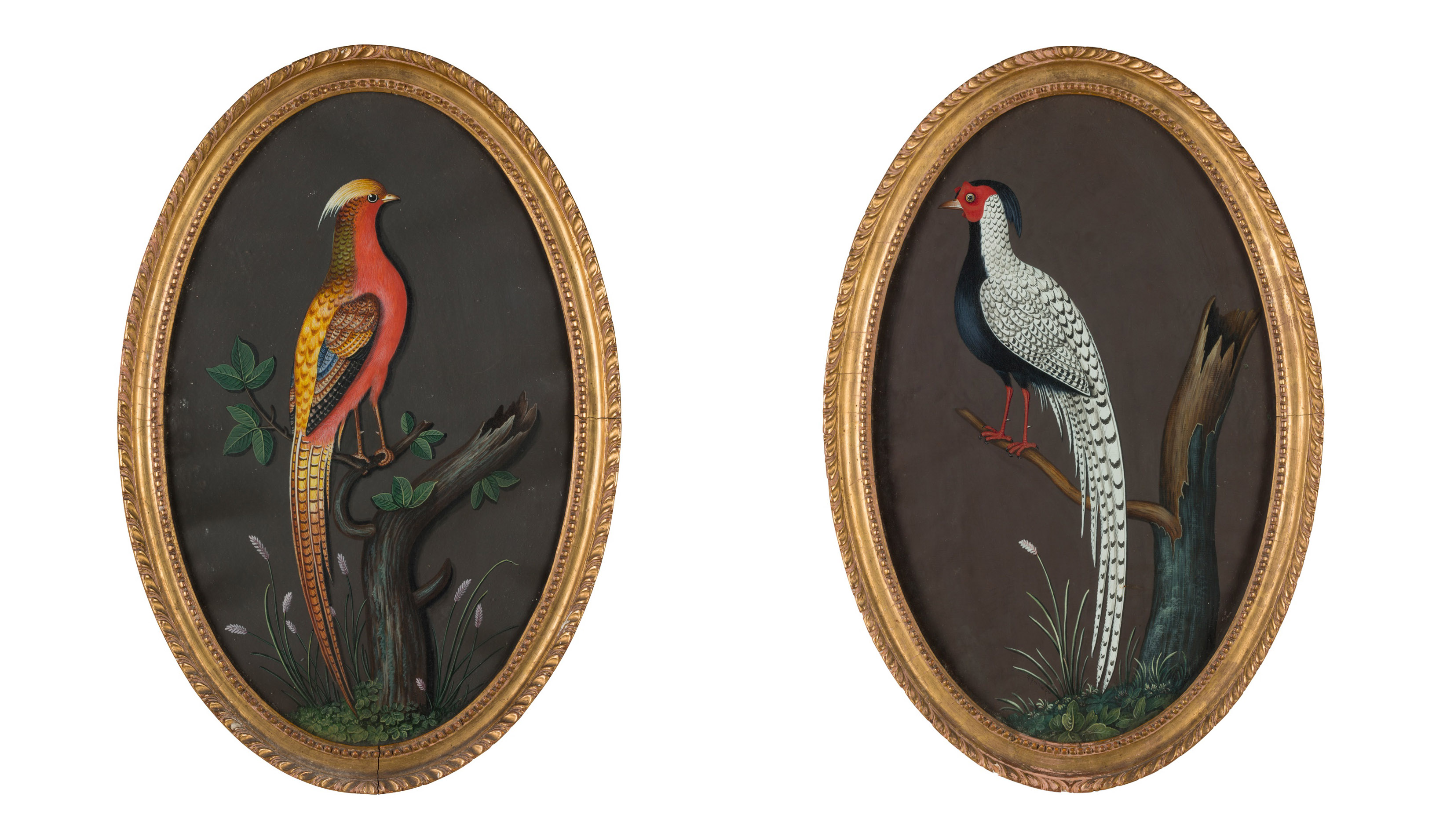 LOT 89 | PETER PAILLOU | CHINESE PHEASANT