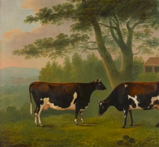 STUDY OF TWO COWS JOHN BOULTBEE