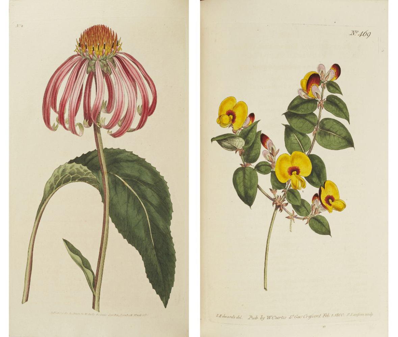 The Botanical Magazine Or Flower Garden Displayed Lyon Turnbull