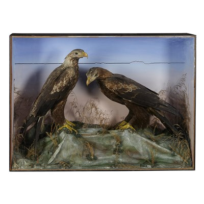 Lot 38 - CASED PAIR OF TAXIDERMY GOLDEN EAGLES