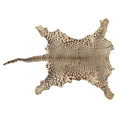 Taxidermy Leopard Head Mount And Skin Rug