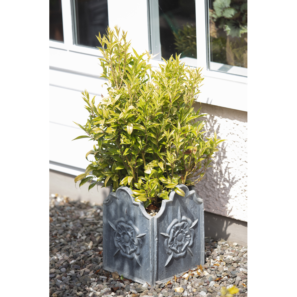 Lot 541 H Crowther Two Cast Lead Garden Planters