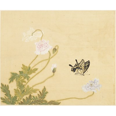 Lot 130 - ALBUM OF TWELVE PAINTINGS OF INSECTS AND FLOWERS