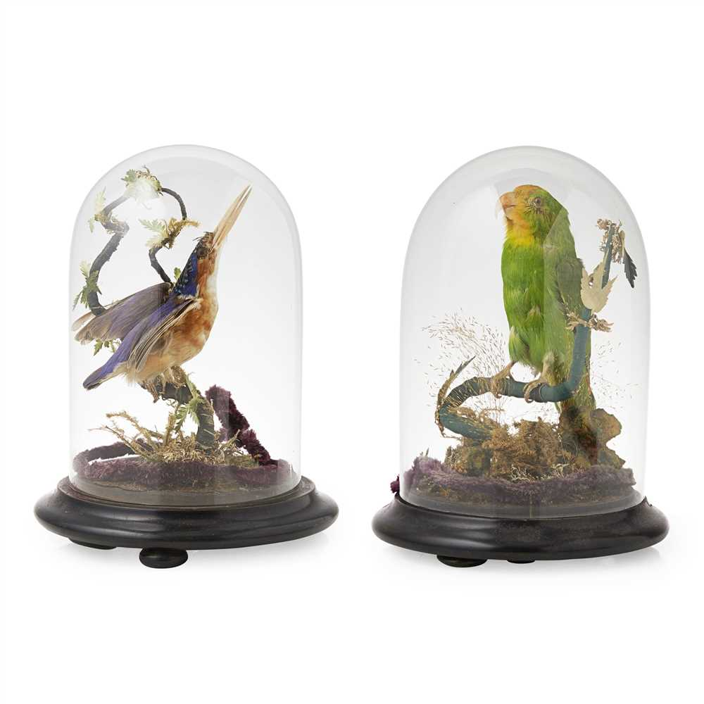 Lot 9-TWO DOMED TAXIDERMY BIRDS