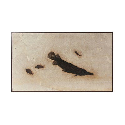 Lot 7 - FINE GAR FISH FOSSIL