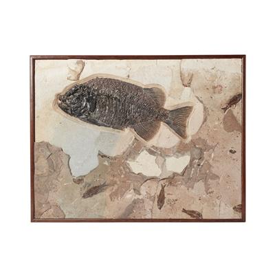 Lot 10 - PHAREODUS FISH FOSSIL PLAQUE
