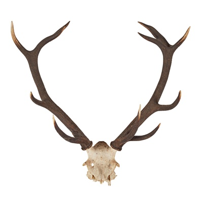 Lot 23 - FIVE SETS OF RED DEER ANTLERS