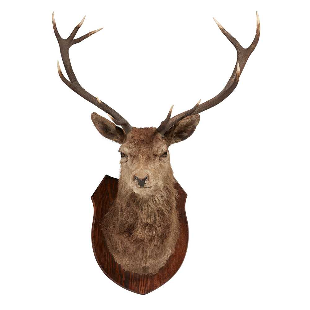 Lot 22-TAXIDERMY: MOUNTED ROYAL STAG'S HEAD