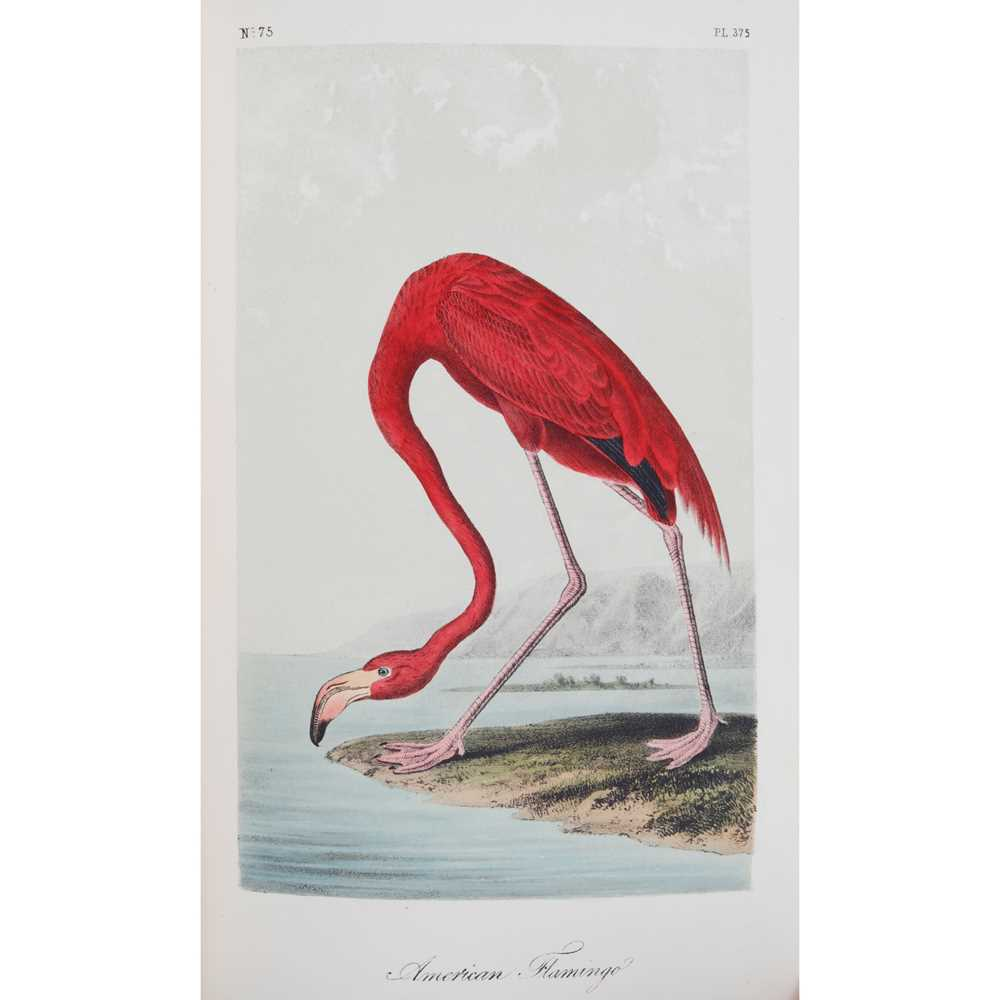 Lot 275 - Audubon, John James