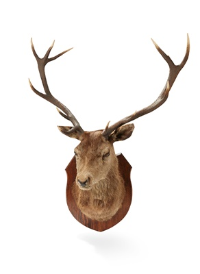 Lot 55 - A TWELVE POINT 'ROYAL' STAGS HEAD
